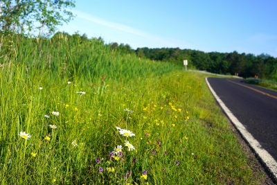 Roadside flowers in the Hayward area, Wisconsin