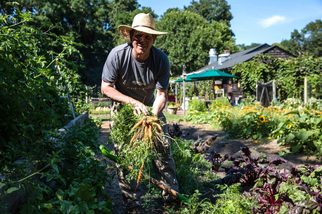 Colin harvesting carrots at the Estia's Little Kitchen garden