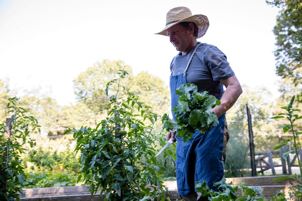 Colin harvesting Kale in the Estia's Little Kitchen garden