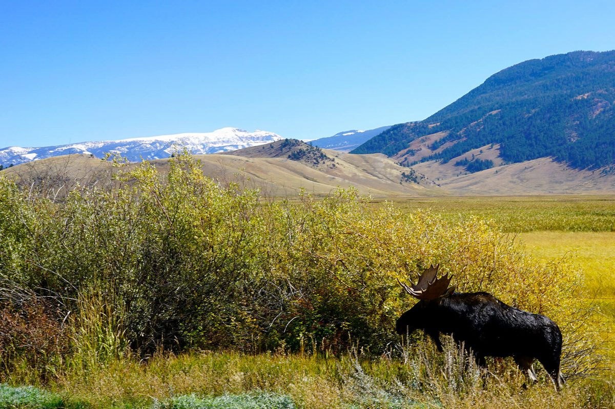 Bull Moose Elk Refuge Highway 89