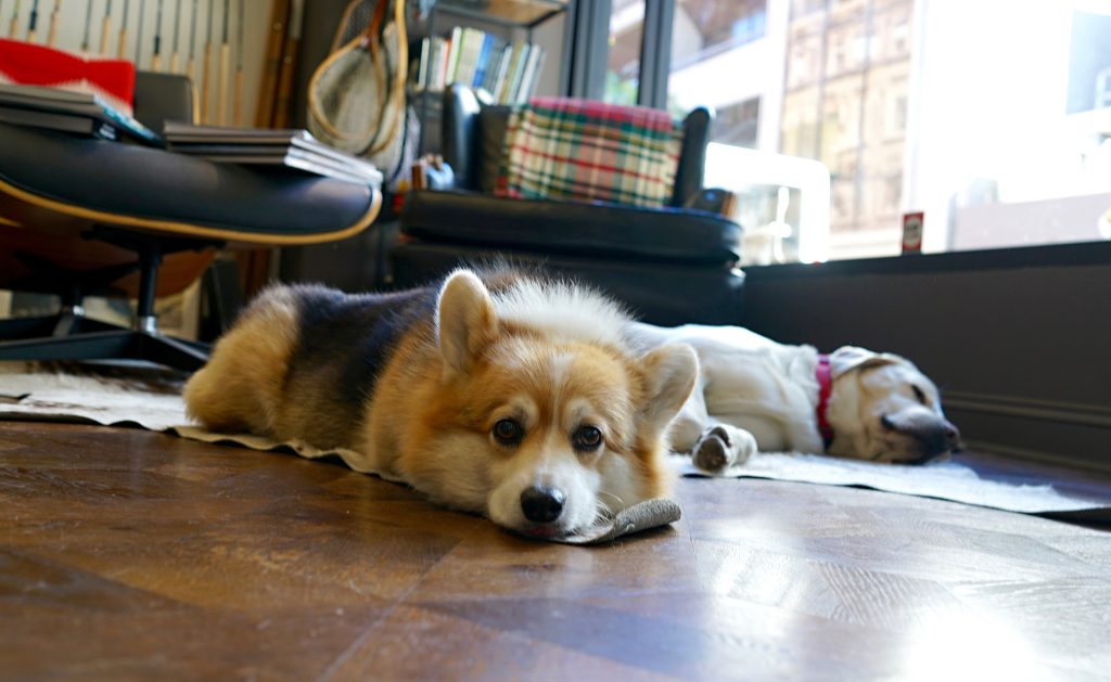 Frankie and Diesel, the Lost Coast Shop Dogs