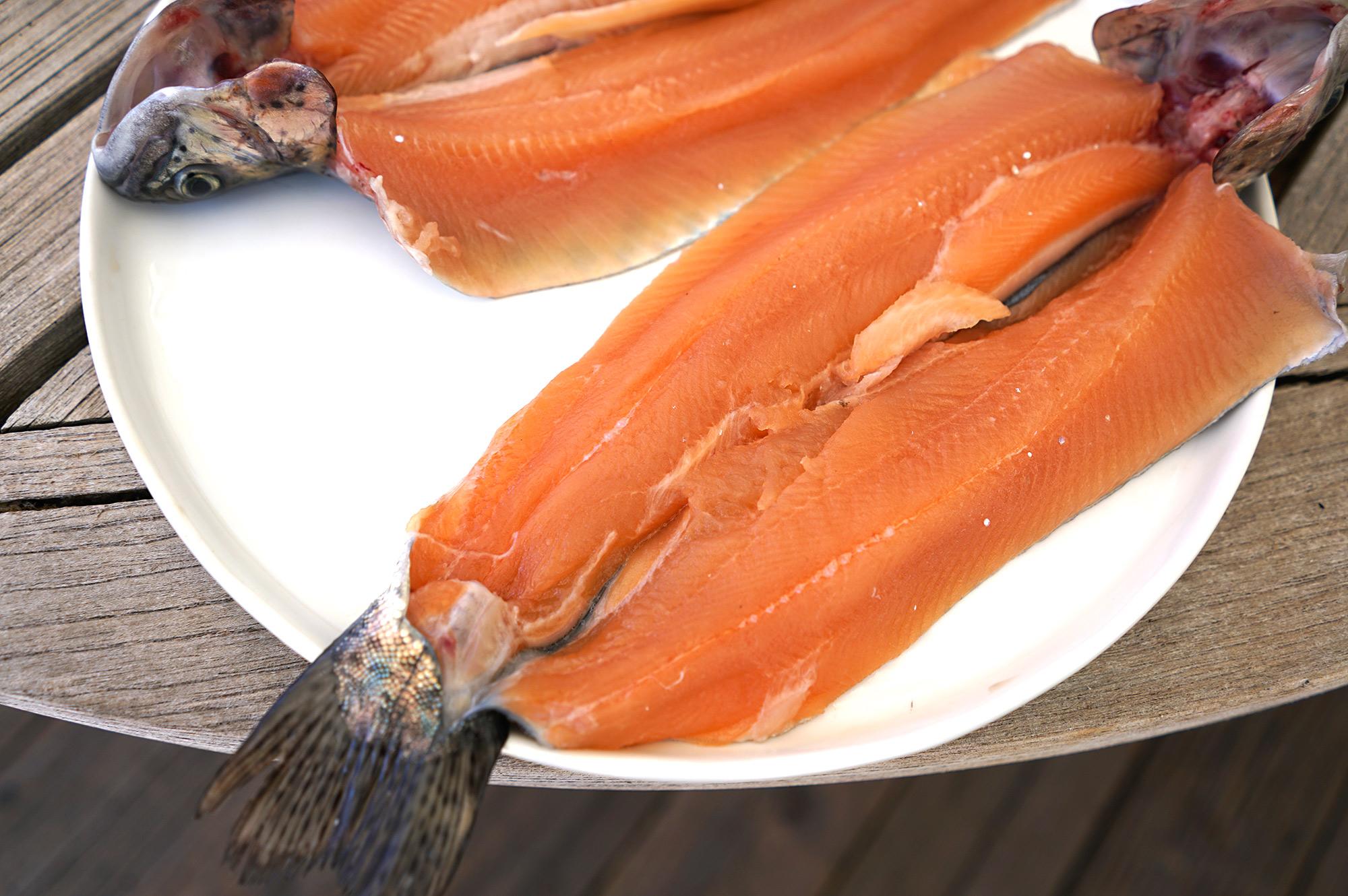 Beaverkill trout hatchery rainbow