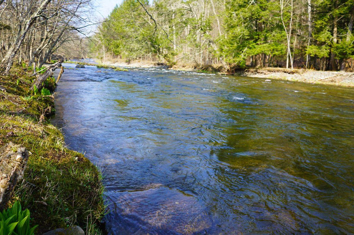 Upper Beaverkill River, Catskill Mountains, New York