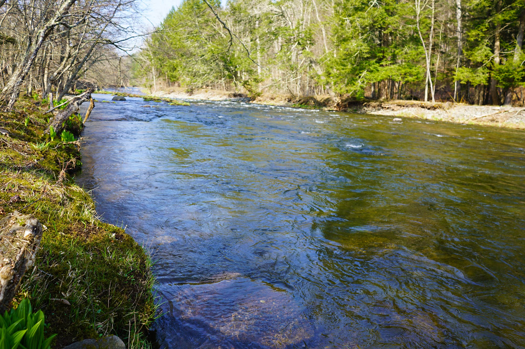 Upper Beaverkill River, Catskill Mountains, New York