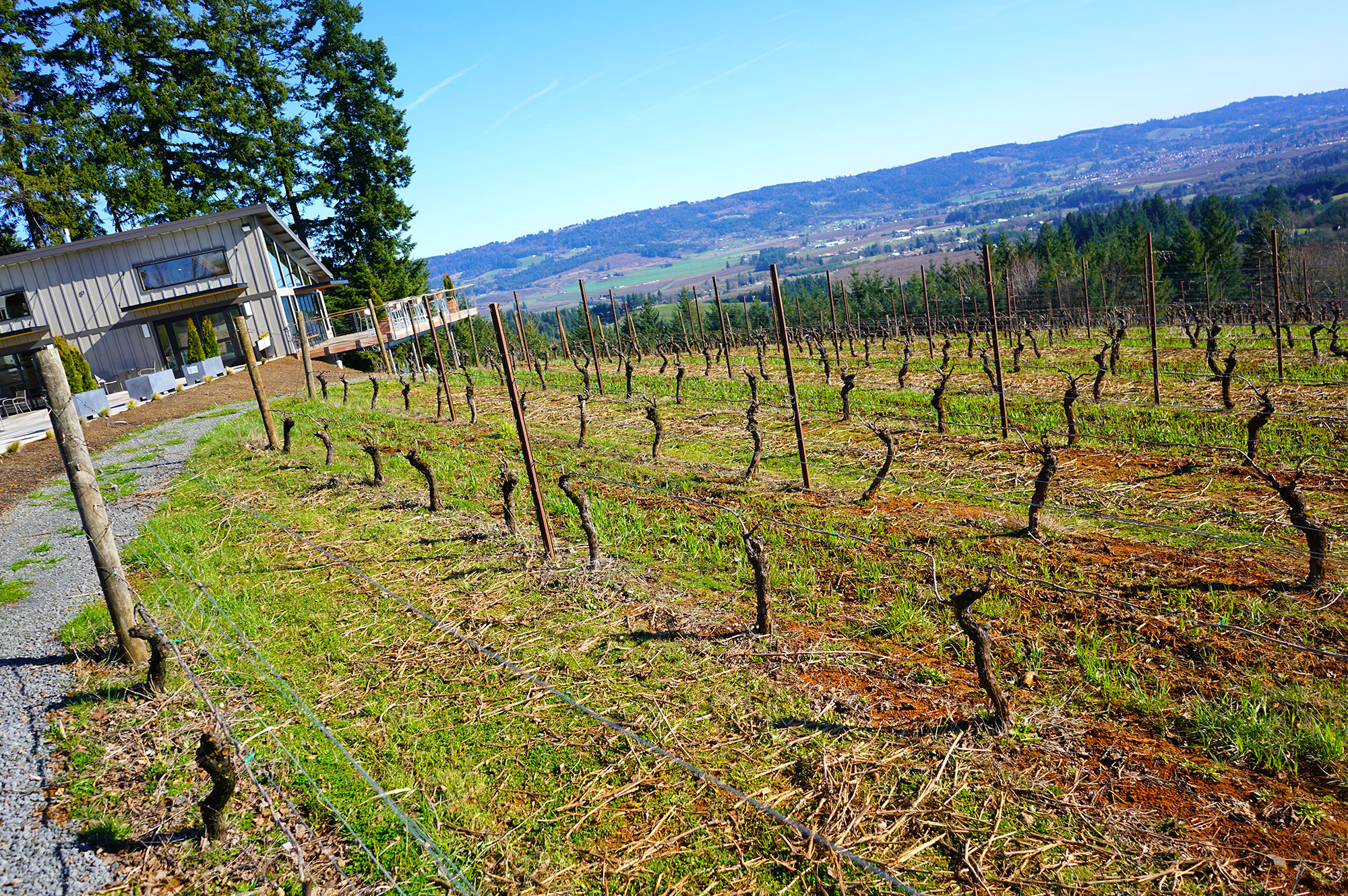 Lange Family Winery