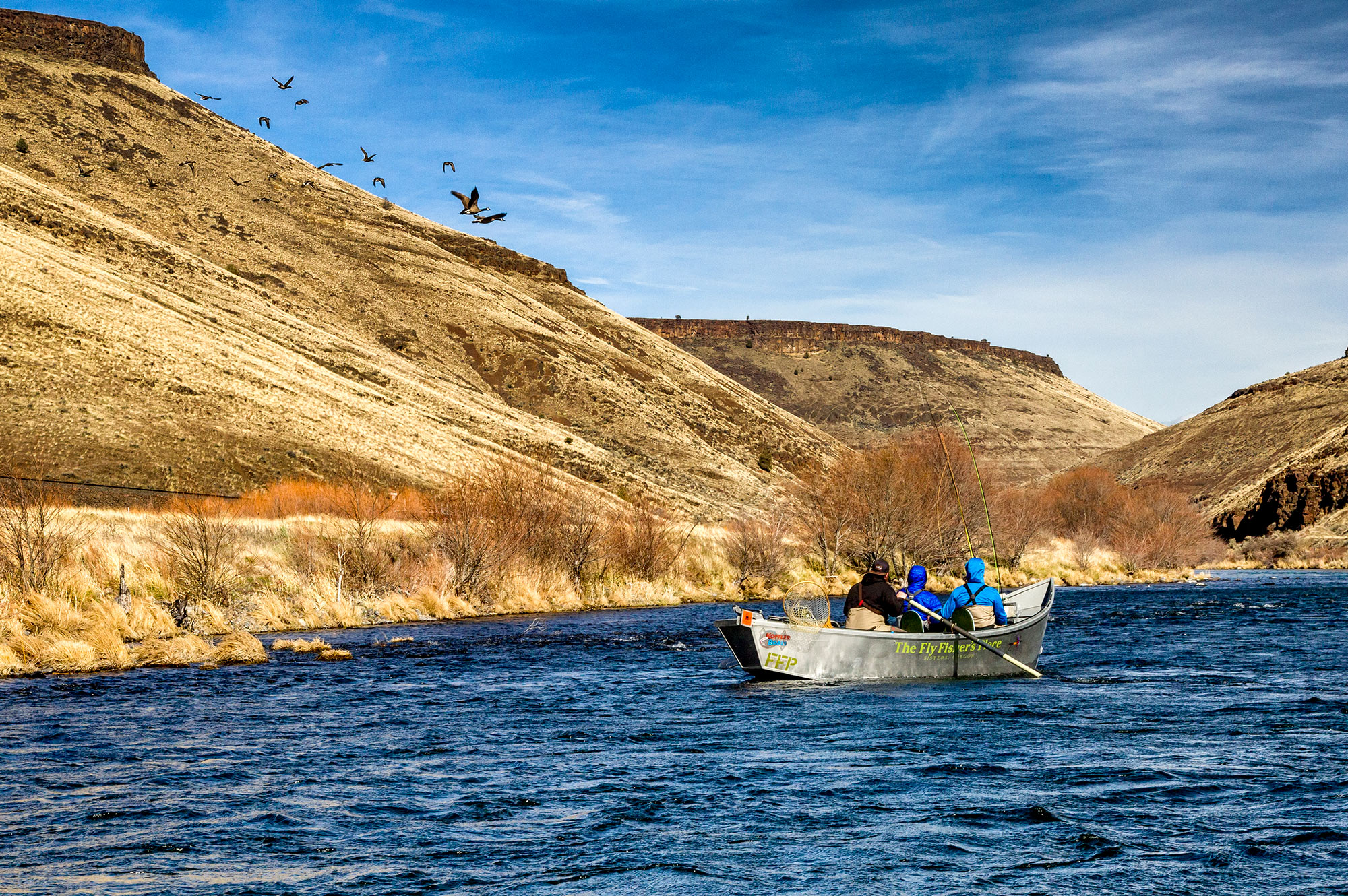 A flock of geese joining us on the Deschutes river