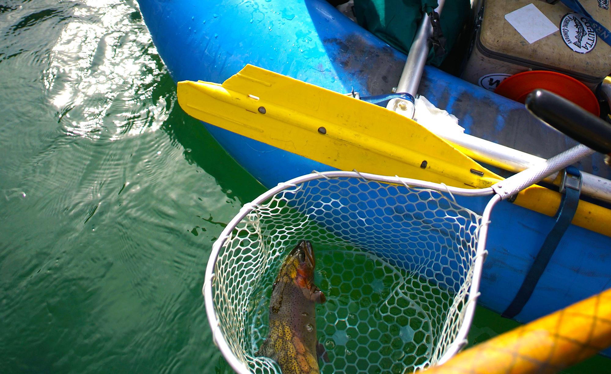 Boatside Cutty